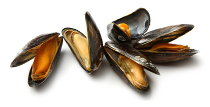 Open, cooked PEI mussels