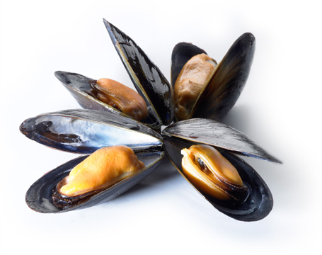 A bouquet of PEI mussels